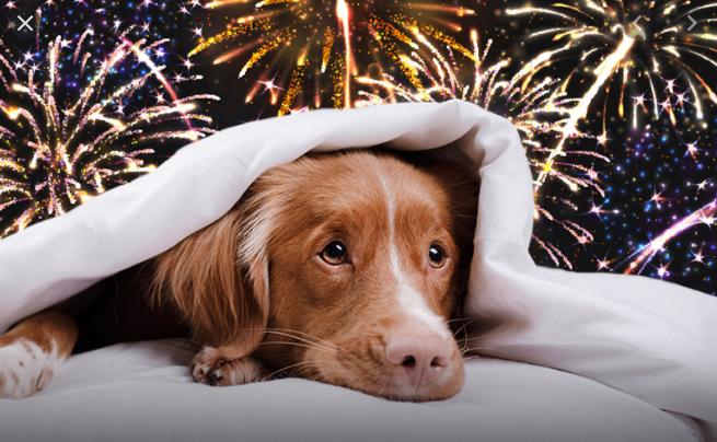 Konec roku je se všemi ohňostroji a petardami pro zvířata jedno z nejnáročnějších období